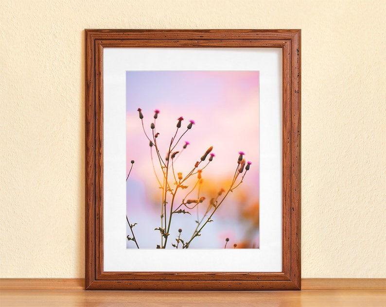 WILD FLOWER SKY // Photography Fine Art Print Summer Evening image 0
