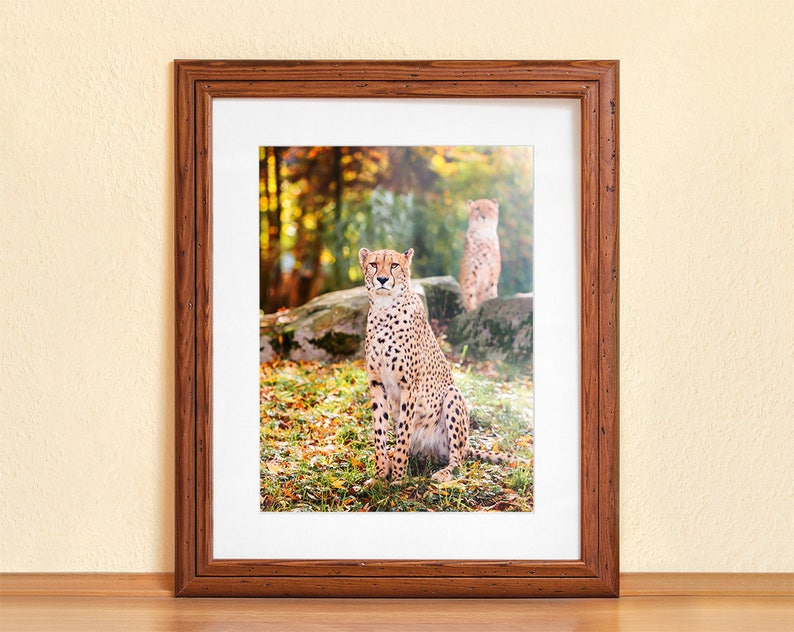 CHEETAH IN AUTUMN // Photography Fine Art Print Big Cat image 0