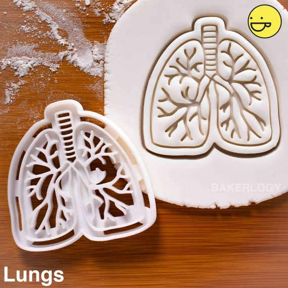 Human Spine cookie cutteranatomical backbone xray anatomy skeleton medical