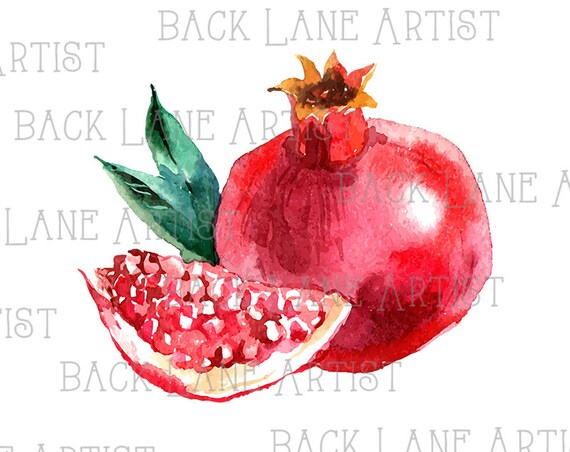 Fruits grenade dessin aquarelle clipart lineart illustration etsy - Grenade fruit dessin ...