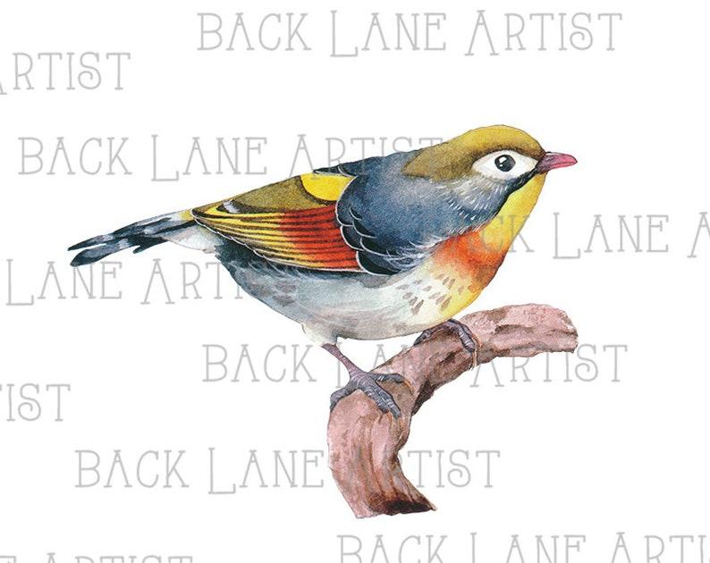 Bird Watercolor Clipart Illustration Instant Download PNG JPG image 0