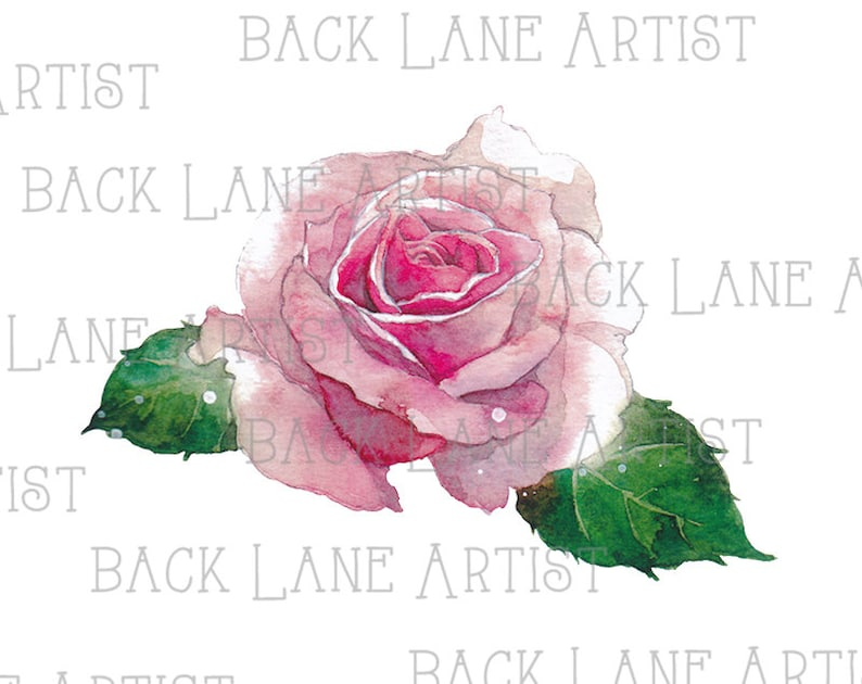 Rose Flower Watercolor Drawing Clipart Lineart Illustration image 0