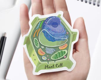 Plant Cell Cross Section Vinyl Sticker, unique science decal, microbiology, biology, laptop sticker