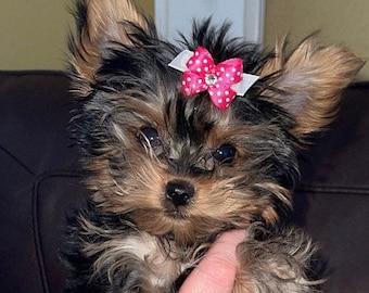 Dog Hair Bows, Small dog hair bow, 8 colors, Swarovski Crystal Center, Maltese Bows, Baby Bows, Yorkie Bows, Shih tzu bows, poodle bows
