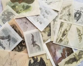 Vintage Bat themed glassine prints kit - translucent paper ephemera for journal, grimoire, scrapbook, book of shadows, collage, altars
