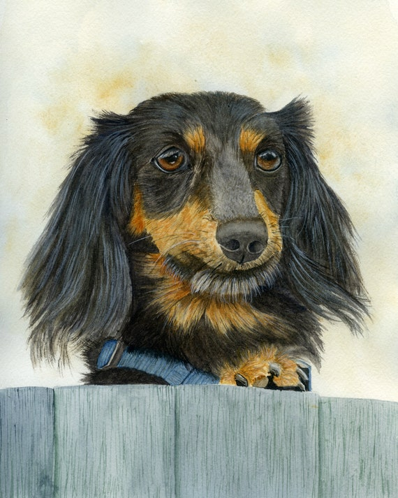 For Dog Lovers Dachshund Dog Fine Art PRINT from an Original Watercolour Painting Pet Portrait Dog Painting Dog Art Pet Memorial Print