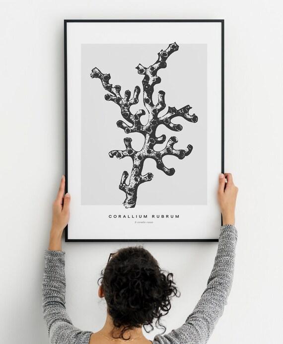 Coral Poster Sea Coral Print Coral Illustration Marine Etsy