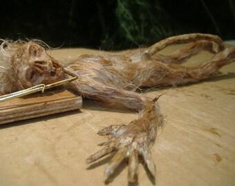 Rat Man in Trap sideshow gaff freak