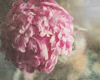 Peony Photo, DIGITAL Flower Photo, Pink Peony, Pastel, Shabby Chic, Spring, Cottage Art, Floral Decor, Botanical, Digital Art Download Photo