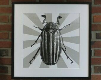 Beetle Poster Print