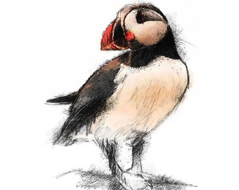 Puffin bird | Limited edition fine art print from original drawing. Free shipping.