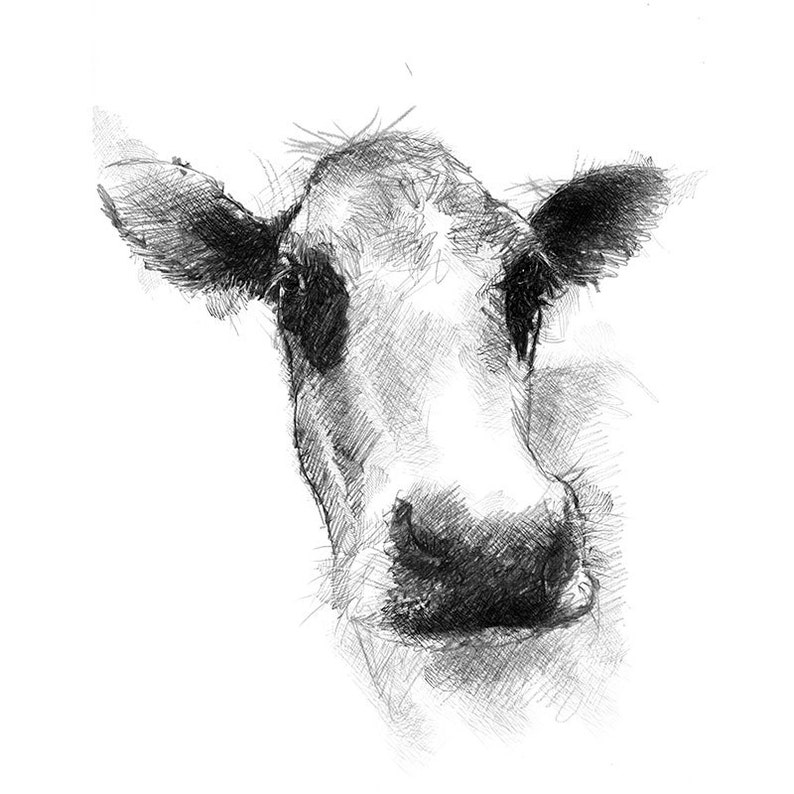 Dairy cow sketch | Limited edition fine art print from original drawing   Free shipping