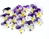 Real Pansy brooch, Viola jewelry, Purple brooch pin, Nature lover gift, Flower gift for mom, pin gift for woman, Anniversary gift  for wife