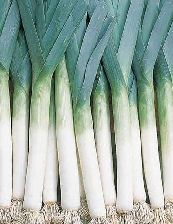 Organic Lancelot Leek