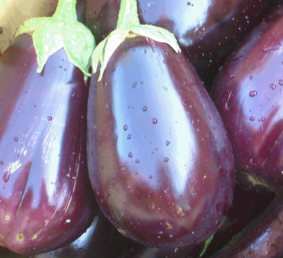 Florida High Bush Eggplant