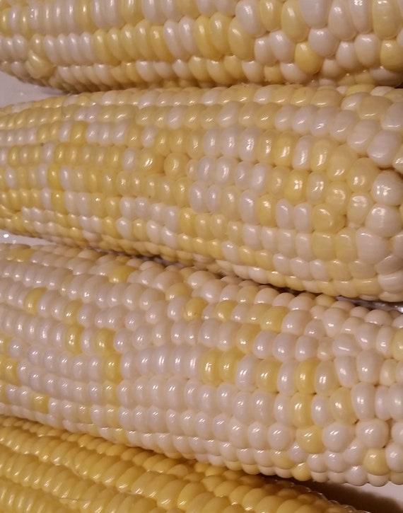 Xanadoo Sweet Corn