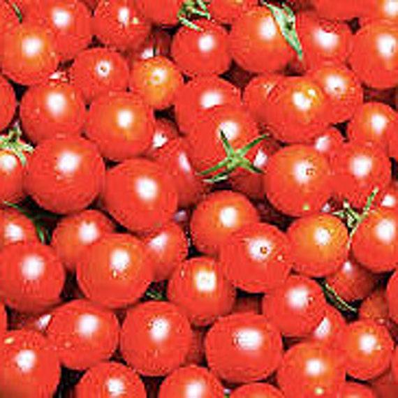 Bing Cherry Tomato