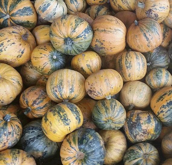 Kakai Hull-less Seeded Pumpkin