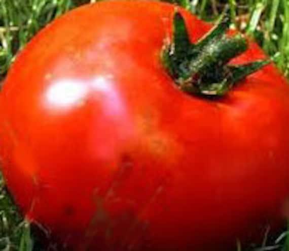 Martian Giant Tomato