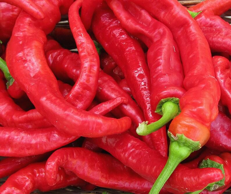 Jimmy Nardello Sweet Frying Pepper Pepper