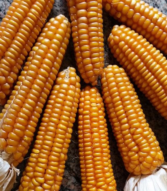 Organic Otto File Polenta Corn