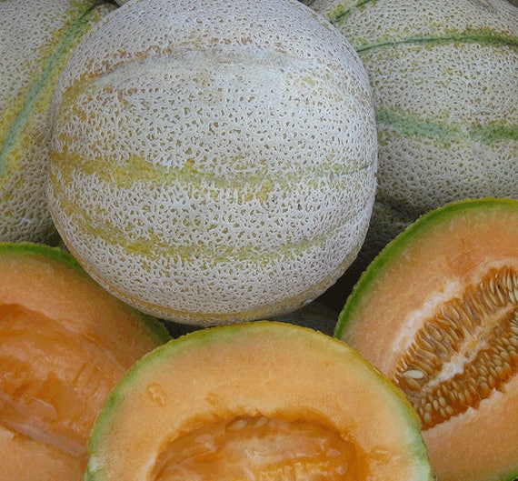 Mountain Honey Melon