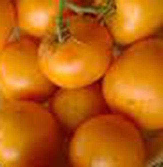 Orange King Tomato