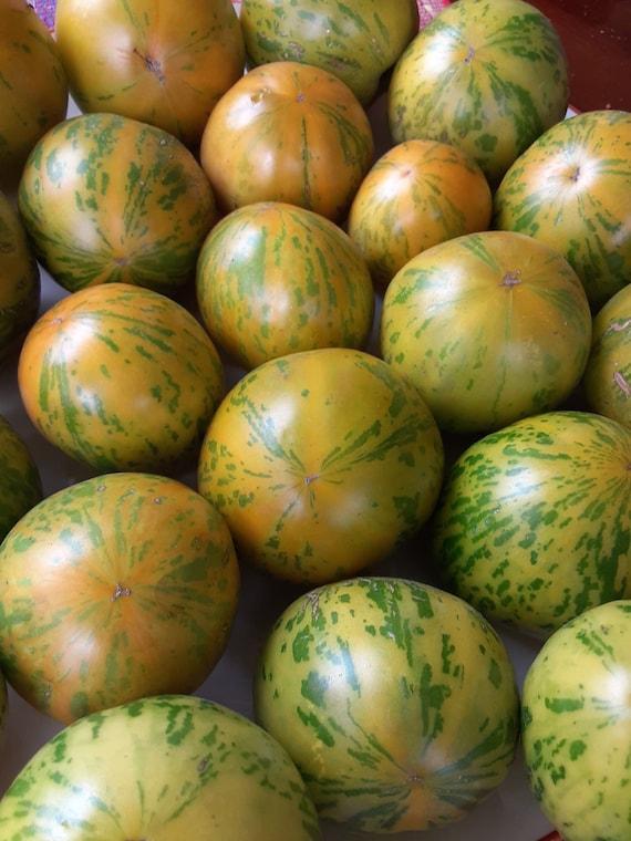 Organic Green Zebra Tomato