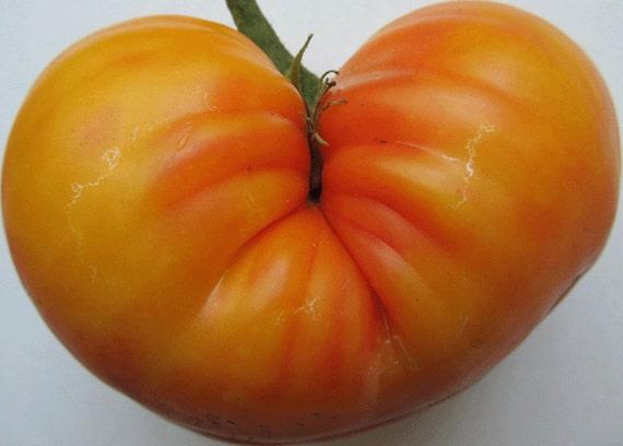Tomato: Big Rainbow