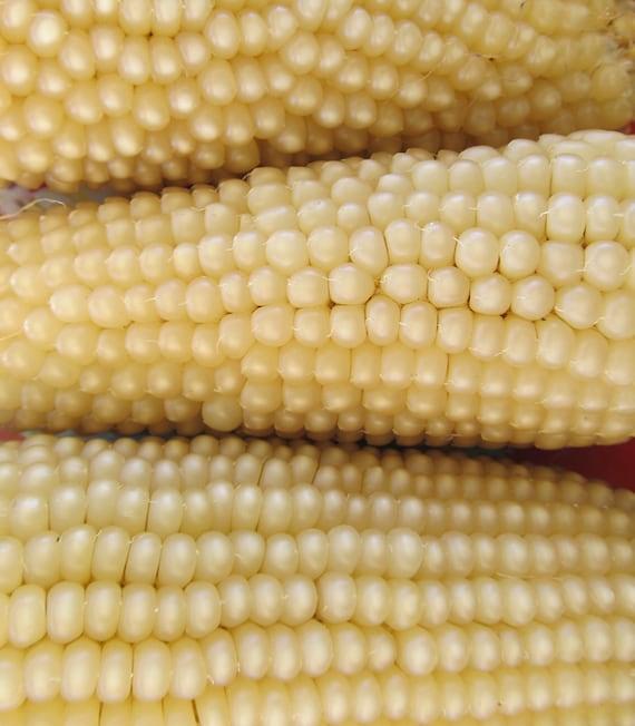 Pennsylvania-Dutch Butter-Flavored Popcorn
