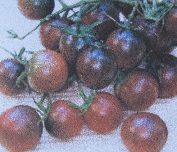 Tomato: Black Cherry