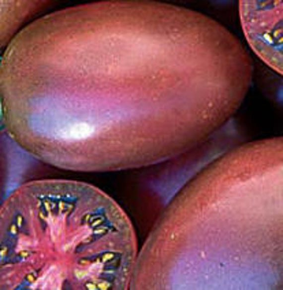 Ukrainian Purple Tomato