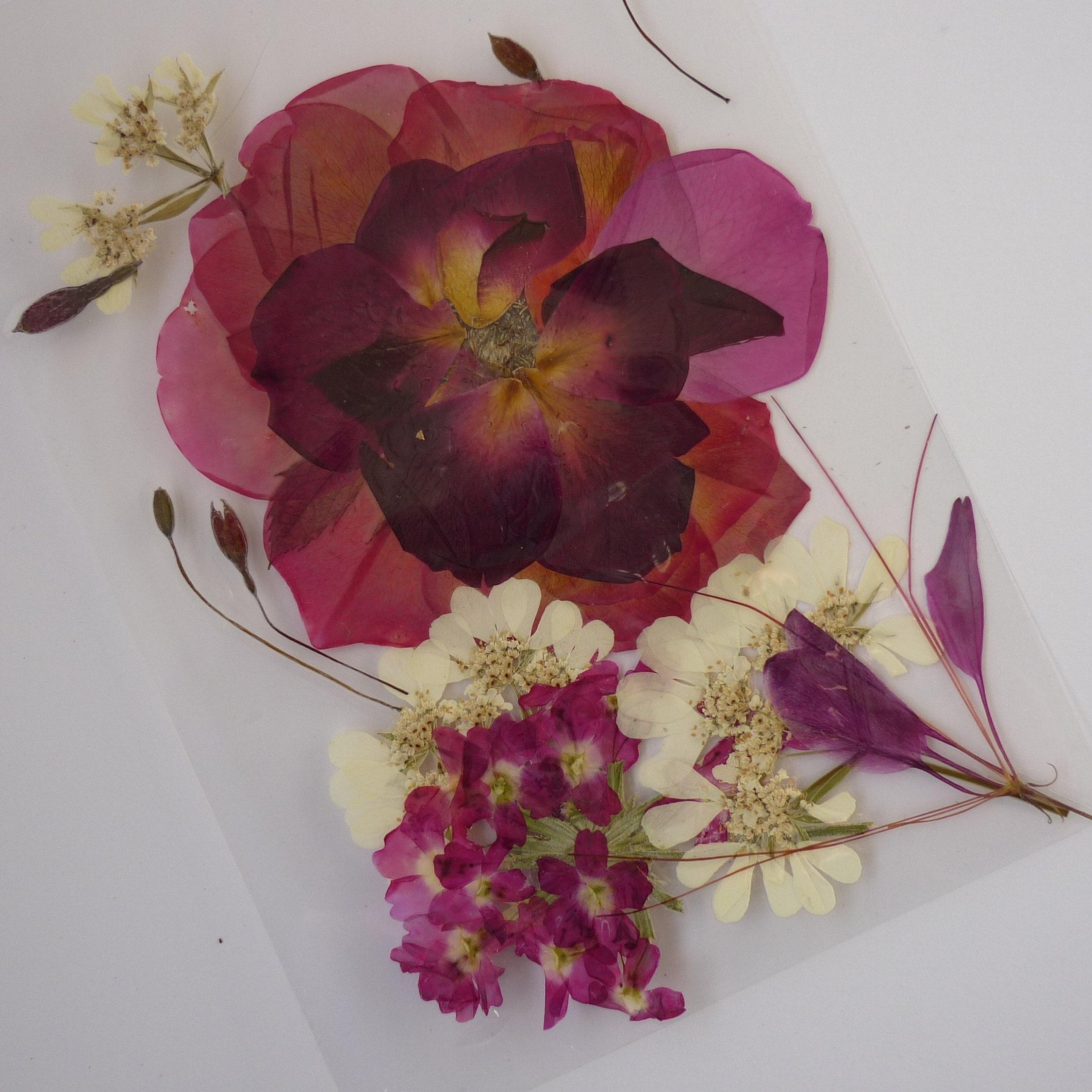 Pressed red roses Pressed flowers Pressed flowers art | Etsy