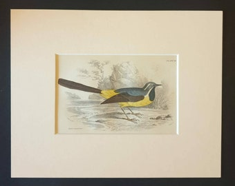 Grey Wagtail wagtail wildlife wildlife prints bird prints animal prints animals birds