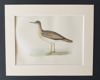 Wood Sandpiper Original 1891 hand coloured bird print in mount