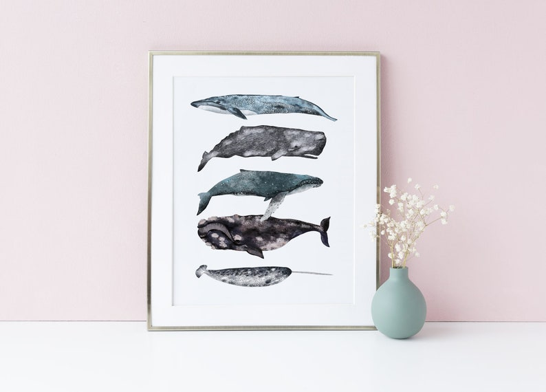 Whales Illustrated Poster Different Types of Whales Nautical image 0