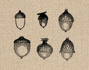 Printable Acorn Collection Acorn Images Acorn Graphics Acorn Clipart Acorn Print Acorn Illustration 300dpi HQ