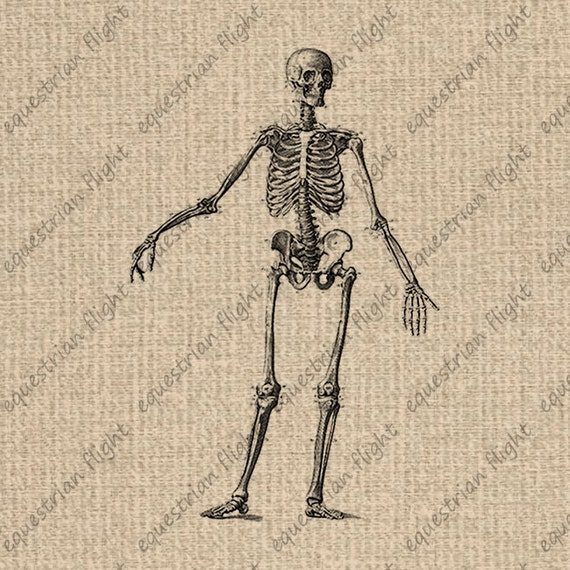 It is a graphic of Printable Skeleton pertaining to simple