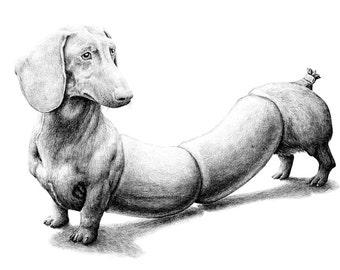 postcard Dog/sausage
