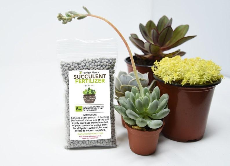 Succulent Fertilizer By Perfect Plants Light Rate Slow Etsy