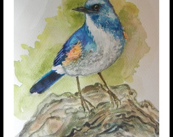 """Original Water color painting, blue bird with white color, With mat 8""""x10"""", 160284"""