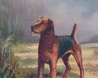 1950 Airedale Terrier Dog Vintage Print
