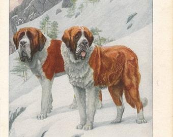 68e6f05f9116 1927 St. Bernard Dog Antique Print