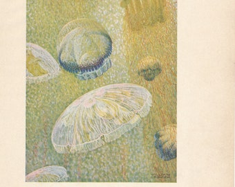 1928 Jellyfish Antique Print