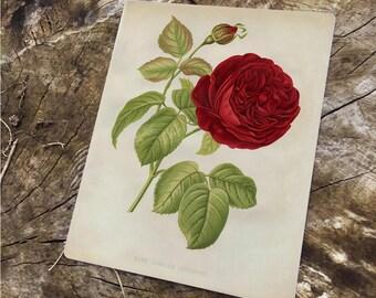 Tin Sign Greeting Card Roses Jubilee Metal Plate