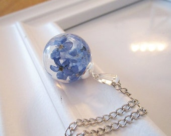 Chain forget-me-not