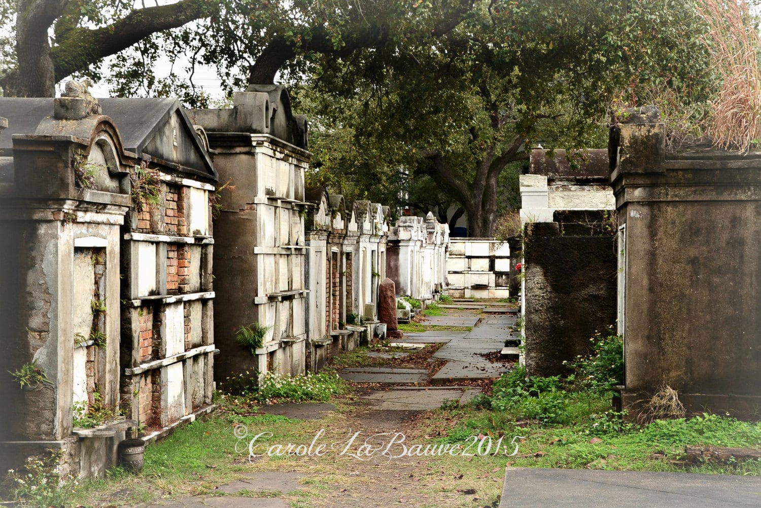 NEW ORLEANS CEMETERY Photography Lafayette Cemetery 1 | Etsy