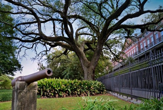 Live Oak Tree In Jackson Square New Orleans Photography Etsy