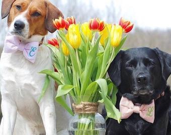 Monogram Dog Bow Tie, Personalized Seersucker Bow Tie, Dog Wedding, Dog Lover Gift, Personalized for Special Occasions