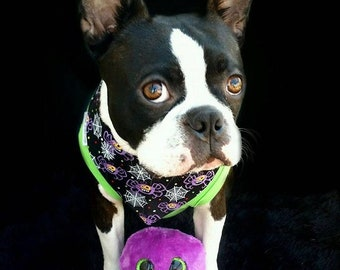 Halloween Dog Bandana with Spooky Glow in the Dark Spiders and Webs in Orange or Black
